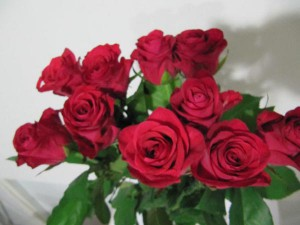 Роза Хот Леди
