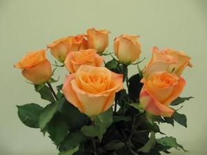 Роза Панама