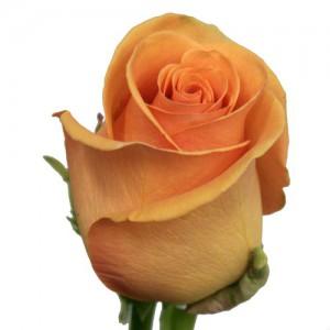 Роза Кумбия
